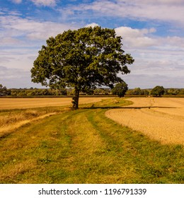 Lone tree landscape