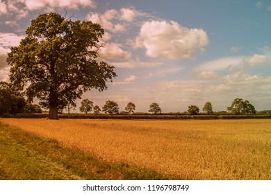Lone tree in landscape
