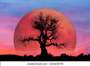 "Lone tree with Lunar eclipse and blood moon ""Elements of this image furnished by NASA"""
