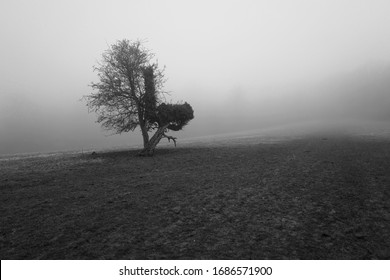 A lone tree in the mist