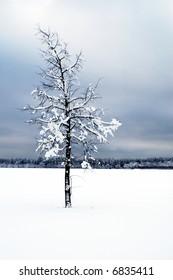 Lone tree in a moody winter scene