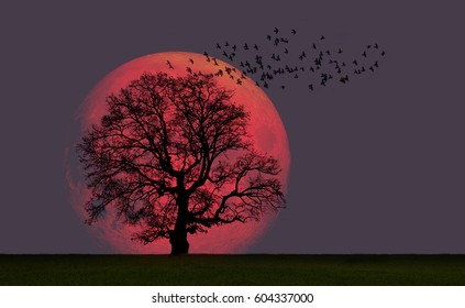 "Lone tree with moon at it largest also called supermoon ""Elements of this image furnished by NASA"""