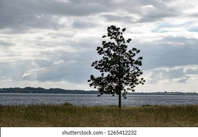 Lone tree in the north sea