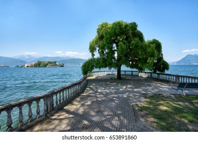 A lone tree on a beautiful view over the Isola Bella on Lago Maggiore, Italy
