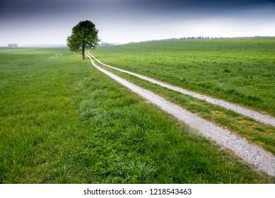 A lone tree on a dirt road, Jutland, Denmark