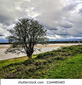 A lone tree on the edge of the estuary with an overcast sky.