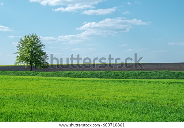 lone-tree-on-farm-field-600w-600710861.j