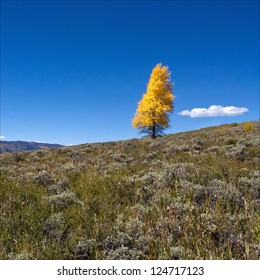 Lone tree on a hill in Colorado.