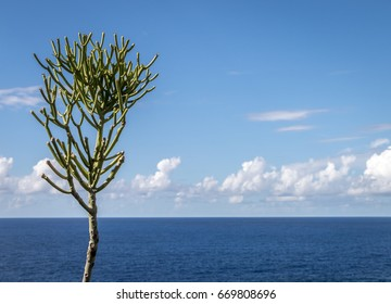 Lone tree on a lovely sunny day, standing out against the backdrop of a sea view and a perfect clear blue sky.