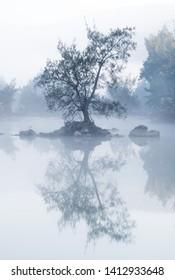 lone tree on the murrumbidgee river