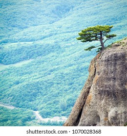 Lone tree on a rock at Demerdji mountain, Crimea, Russia. Instagram style photo of Crimea landscape. Minimalist scene with pine tree on green valley background. One juniper tree on a cliff in summer.