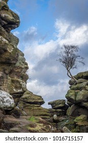 Lone tree on rock outcrop at historical Brimham Rocks on Brimham Moor near Pateley Bridge in Yorkshire