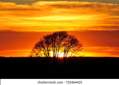 Lone Tree on West Texas Plains at sunset.