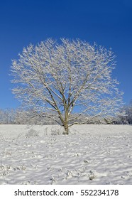 A lone tree in a pasture after a new snowfall. Concept for peace, tranquility, and winter.