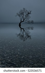 Lone tree with perched birds, Lake Wanaka, New Zealand