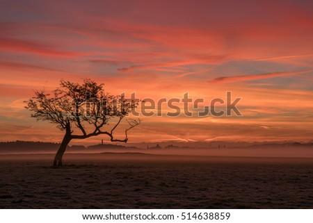 lone tree phoenix park dublin sunrise stock photo edit now