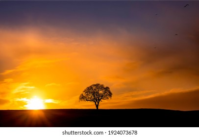 Lone tree silhouette at dawn. Sunset sky lone tree silhouette. Sunset lone tree at dawn. Sunset tree silhouette at dawn