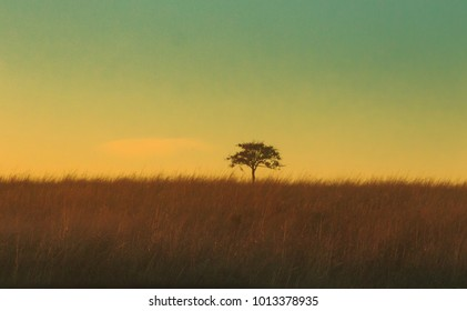 A lone tree sits in the grasslands of the Tallgrass Prairie Preserve located in Pawhuska, Oklahoma 2018