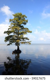 A lone tree sits in the water off Corolla, NC in Currituck Sound.