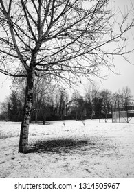 Lone tree in the snowscape, vertical image