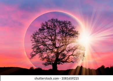 "Lone tree with Solar eclipse ""Elements of this image furnished by NASA """