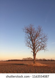 lone tree standing on plowed ground.
