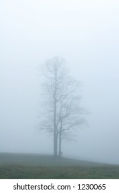 A lone tree standing tall in a foggy field.  Tennessee, USA.