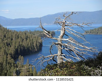 A lone tree stands overlooking scenic Emerald Cove on Lake Tahoe, on the California side.
