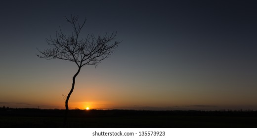 A lone tree at sunset over the Norfolk countryside
