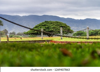 Lone tree in a vast green lawn at Haleiwa Beach Park, North Shore, Haleiwa, Hawaii, Island of Oahu in a cloud day.
