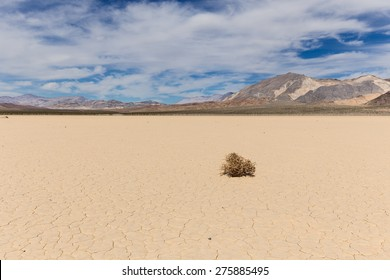 Lone weed on dry lake bed in Mojave desert with cracked mud on a lake floor, blue sky, clouds and mountains. Racetrack Playa. Death Valley national park. California. USA.
