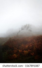 Lone windswept tree in fog with brown ferns
