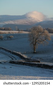 Lone winter tree and dry stone wall  in blue shadow, winter field, North Yorkshire