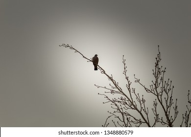 the loneliness of a bird