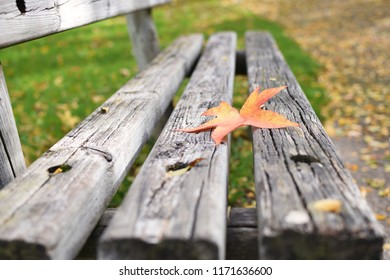Loneliness concept Autumn Fall Bench Maple leaf Copy space Solitude Depression New start Procrastination
