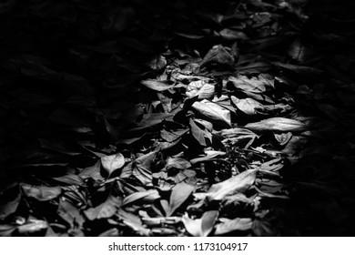 Loneliness, Fallen leaves