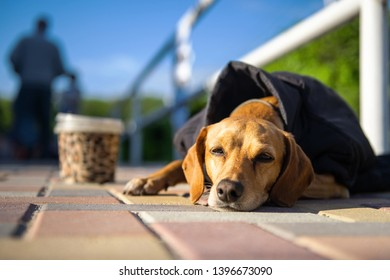 Stray Jacket Images, Stock Photos & Vectors | Shutterstock
