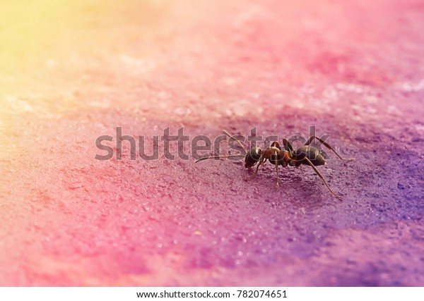 lonely-ant-sits-on-humidified-600w-78207