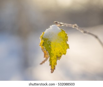 Lonely autumn leaf in the winter. Close up. Selective focus