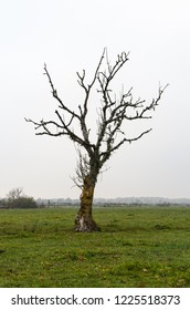 Lonely bare tree in a green grassland by fall season