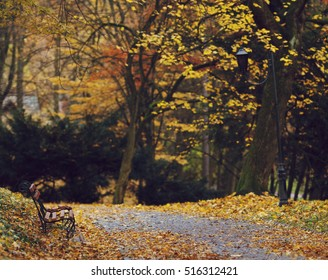 Lonely bench in the autumn park