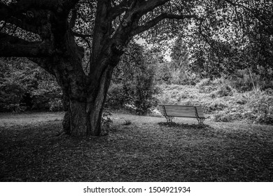 Lonely bench under a tree during Autumn, in Paris France during the Fall season