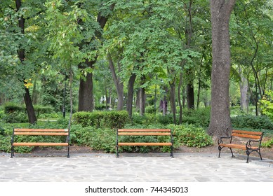 Lonely benches in the park on late summer afternoon.