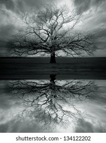 Lonely big tree with reflection,sky with dark clouds