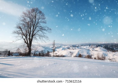 Lonely big tree at the top of winter snowy hill