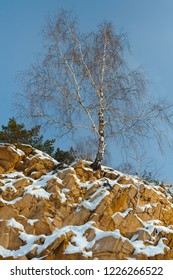 Lonely birch growing on a steep steep slope against a blue sky. Winter landscape