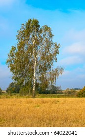 Lonely birch on a stubble field against blue cloudy sky