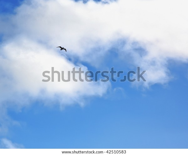 lonely bird in the blue sky