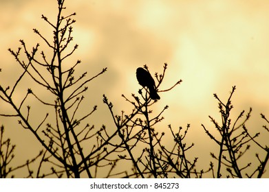 Lonely Bird at Dusk