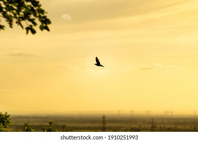 A lonely bird flying by with an atmospheric sky.